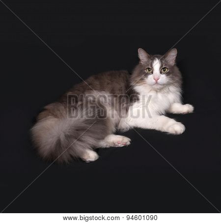 Gray And White Fluffy Cat Lying On Dark Gray