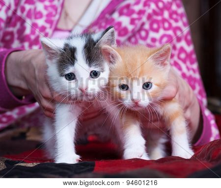 Two Fluffy Kitten Standing On Bed