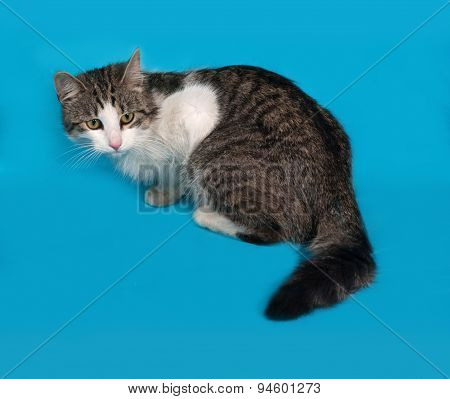 White And Tabby Cat Sitting On Blue