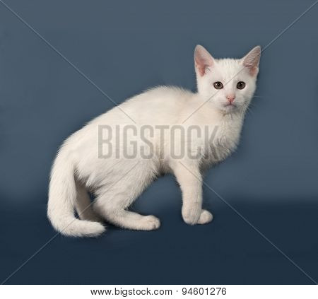 Small White Kitten Standing On Gray