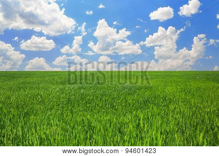 Field with green grass over blue sky background
