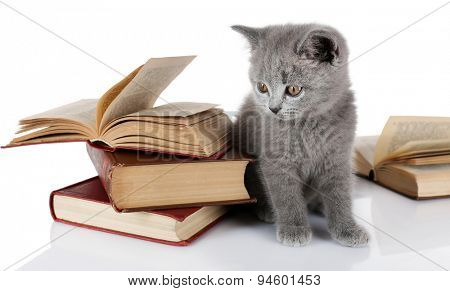Cute gray kitten with pile of books isolated on white