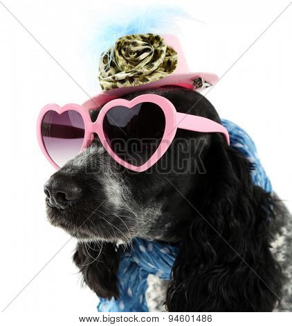 Cute dog with sunglasses, cap and scarf isolated on white background