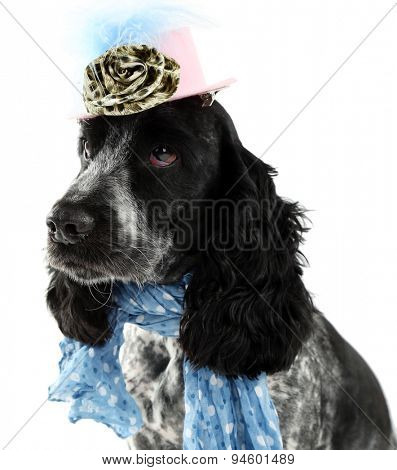 Cute dog with blue scarf and hat isolated on white background