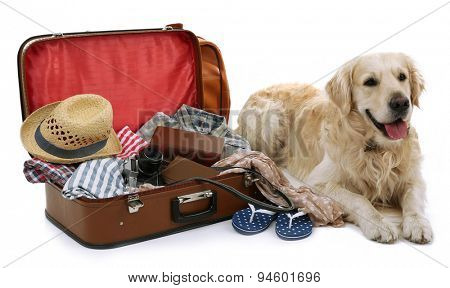 Cute Labrador with suitcase isolated on white