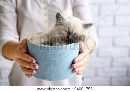 Young woman holding box with cat on light wall background