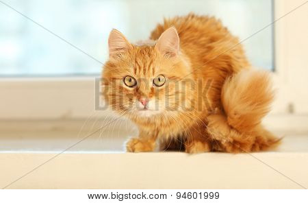 Red cat on windowsill background