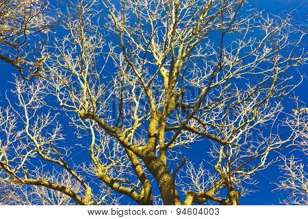 Tree branches on blue sky