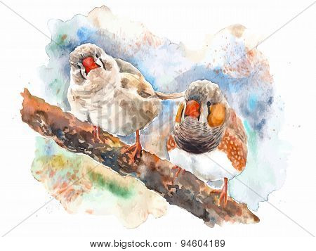 Vector watercolor zebra finches on the branch