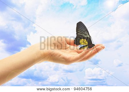 Human hand with butterfly on sky background
