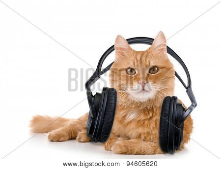 Red cat with headphones isolated on white