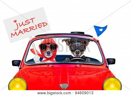 Just Married Dogs