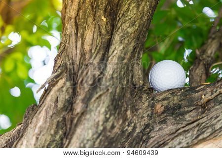 Golf ball in tree