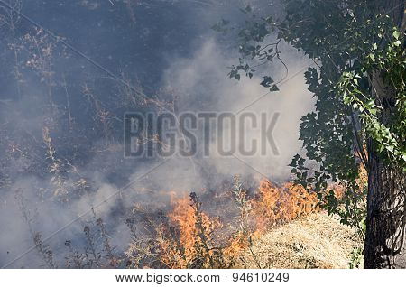 Bush on Fire