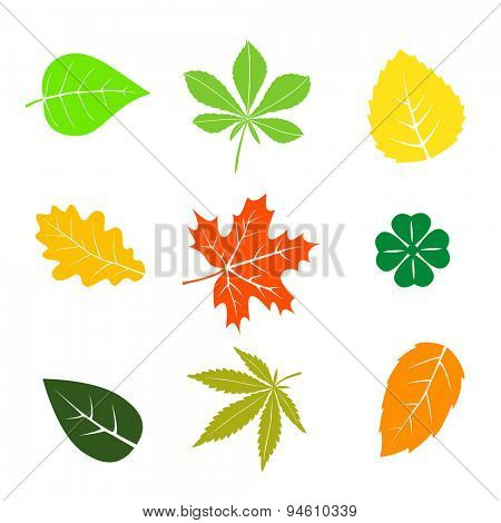 Colorful autumn leaves set on white