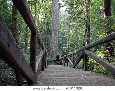 Wooden Footpath Bridge