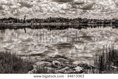 Florida Everglades Lake, Black and White