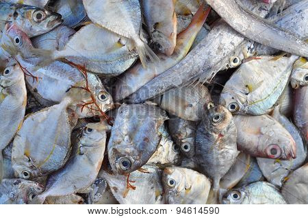 Forage fish in a local market in Vietnam