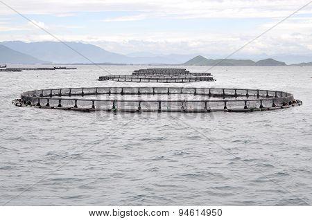 Marine cage culture in the sea