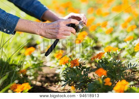 close up of senior woman taking photo of flowers