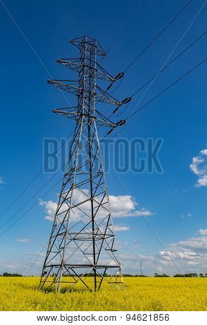 Powerlines On Rape Field