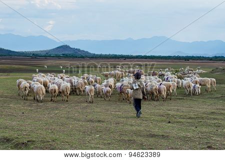 Unidentified little boy and his herd of ship in Ninhthuan, Vietnam