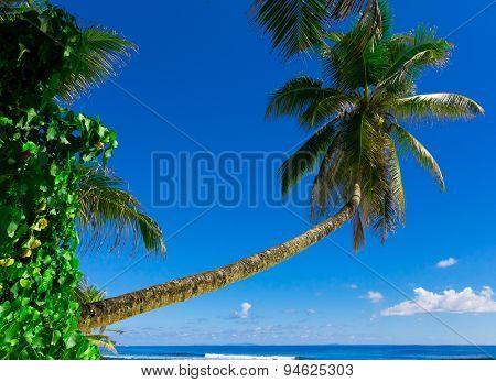 Dream Coast Sea