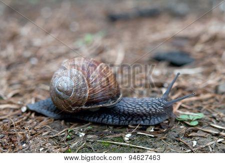 Snail Creeps