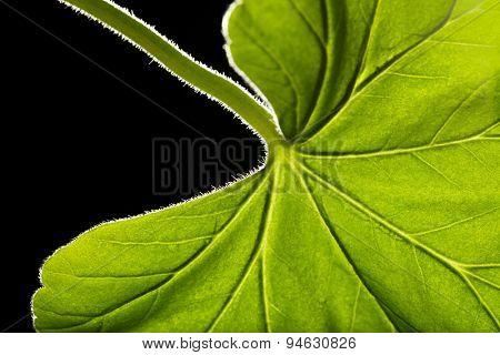 Tree green leaf close up