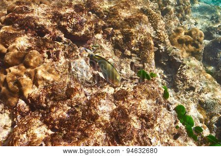 Coral reef and fish at Seychelles