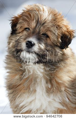 Portrait Of A Young Shaggy Puppy.