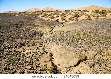 Old Fossil In   Desert Of Morocco Sahara And Rock  Stone