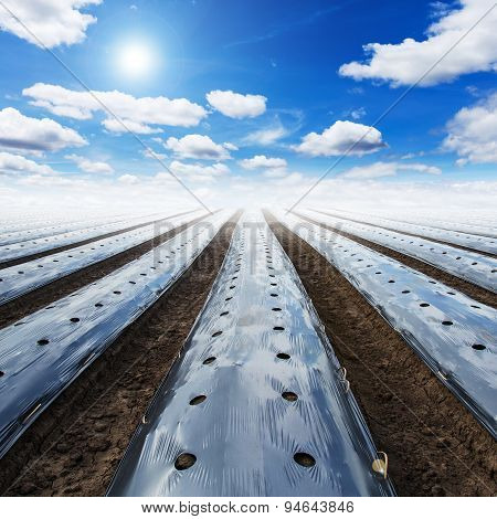 Field Agriculture Mulching Film Protect And Blue Sky With Sun