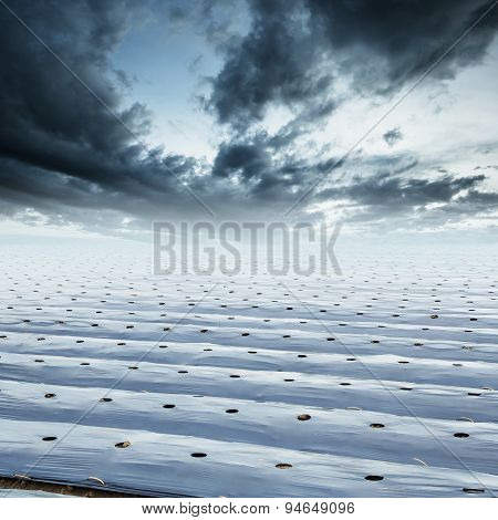 Field Agriculture Mulching Film Protect And Rainclouds