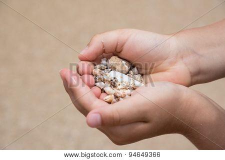 Handful Of Various Shape Sea Shells