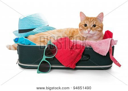 Orange Cat Lay On A Suitcase