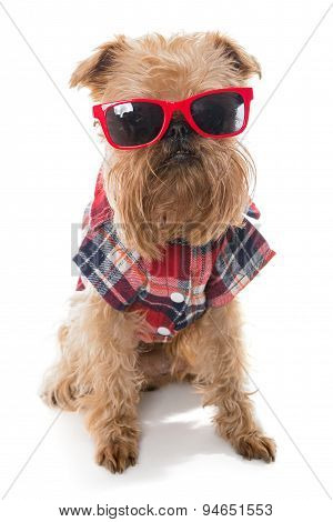 Dog Breed Brussels Griffon Red Glasses