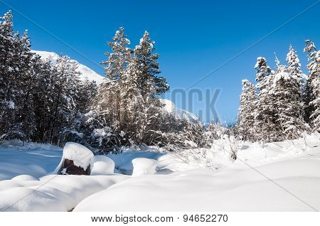 Snowy Mountain River With Spruce Forest At Cold Winter Day