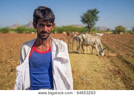 GODWAR REGION, INDIA - 14 FEBRUARY 2015: Young Rabari shepherd with no turban stands in field with cattle. Rabari are an Indian community in the state of Gujarat.