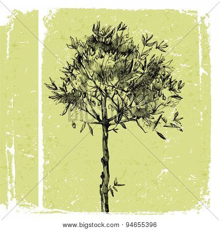 Young hand drawn olive tree