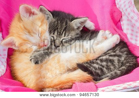 Kitten Sleeping Together