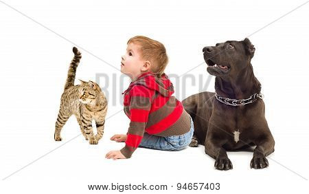 Cute boy, a dog and a cat