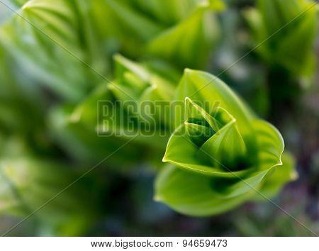 Fresh green foliage leaf plant closeup