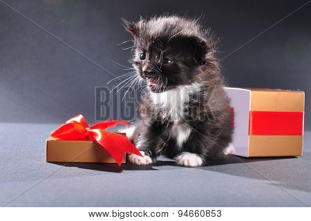 Black Kitten From Christmas Present Box