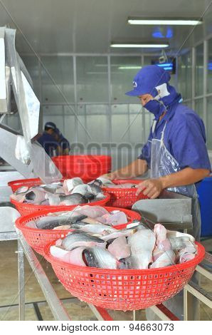An Giang, Vietnam - December 26, 2012: Vietnamese Workers Are Sorting Pangasius Fish After Cutting I