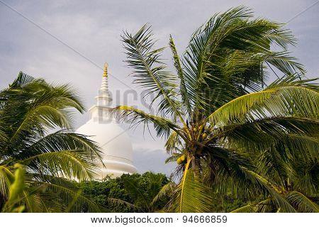 Palms tree, Japanese peace pagoda on background, Unawatuna Sri Lanka