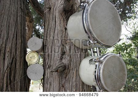 Old drums hanging on juniper tree