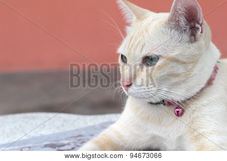 Cat Beautiful Sitting And Looking