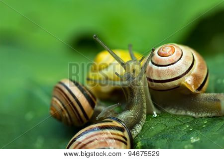Group snails in tight connection