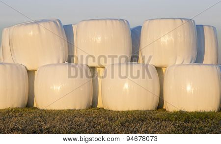 Wrapped Silage Bales